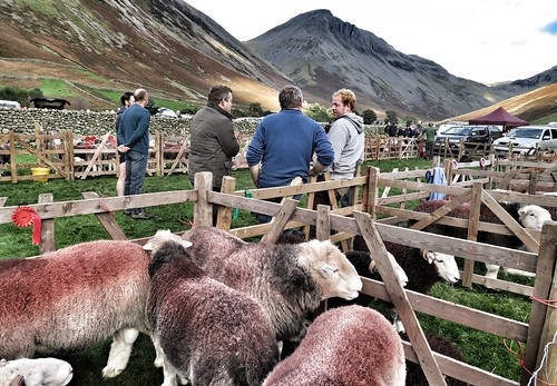 Wasdale Shepherds Meet