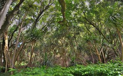 Ancient Heiau (Thuncher Photography (Million+ Views Club)) Tags: hawaii nikon maui hana nikkor 1635mm d700