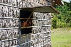 125547512 (Ed Shilov) Tags: cambodia rabbitisland kohtonsay tonsay cambodiaislands