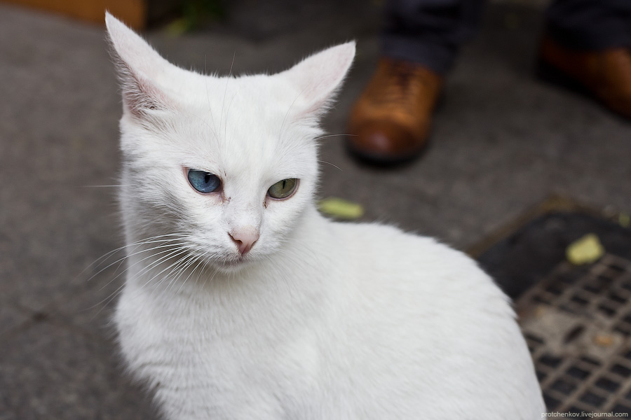 Cats of Isanbul