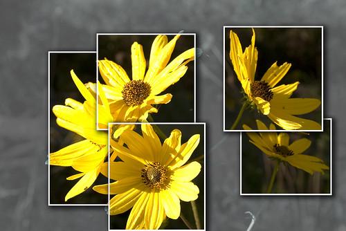 Flower Power.1