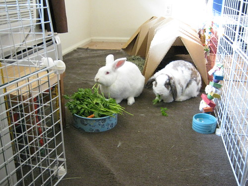 gus and betsy eating breakfast