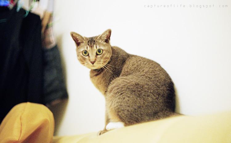 Bill the cat