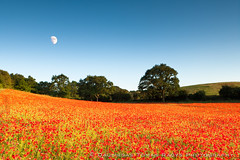 Poppy field (LongLensPhotography.co.uk - Daugirdas Tomas Racys) Tags: flowers blue trees sunset red england orange moon color colour green english nature beauty field june landscape star evening countryside fight blood war warm day bright symbol display farm low country wide cotswolds poppy poppies bloom moonlight rays worcestershire sight colourful independence disc levels moonscape fiery blackstone ablaze bristish