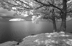 Derwent Water Shoreline (Yitchie) Tags: trees england lake landscape shoreline lakedistrict infrared derwentwater denise mcdonald lovelylovelyphoto