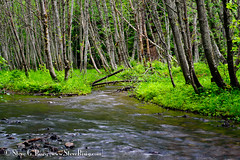 Price Creek - Kittitas County, Washington