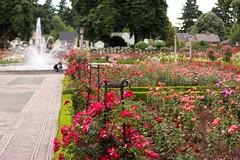 IMG_9095 (Alicia J. Rose) Tags: rose j stunning portlandoregon rosegarden summerday fullbloom peninsulapark gardenamerican flowerstopiary beautydigital magicportland oregonjuneuaryalicia