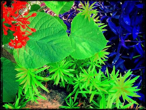 Gardener's Trash by bichonphoto