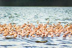 "PhotoFly Travel Club Kenya Safari 2011! • <a style=""font-size:0.8em;"" href=""http://www.flickr.com/photos/56154910@N05/5892979762/"" target=""_blank"">View on Flickr</a>"
