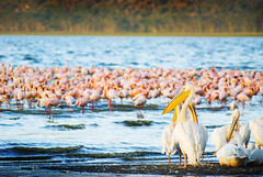 "PhotoFly Travel Club Kenya Safari 2011! • <a style=""font-size:0.8em;"" href=""http://www.flickr.com/photos/56154910@N05/5892981574/"" target=""_blank"">View on Flickr</a>"