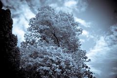 snowy summer (R23W) Tags: ocean trees sky beach boston ma sand nikon infrared mass nahant cokin d7000