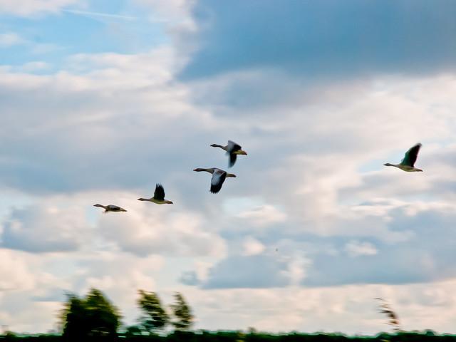 Trekken vogel 1 125 sec