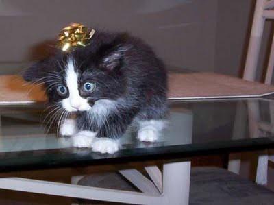 cat_birthday_parties_05