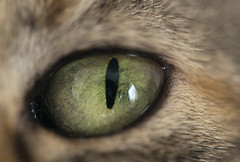 Gaze (debunix) Tags: green cat emily cmwdgreen