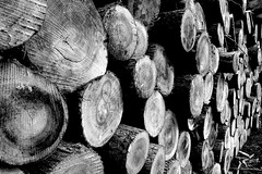 8 (grwsh.marcel) Tags: wood bw white black canon logs 8 7d zwart wit eight 1022mm hout blackdiamond zw acht huit canon7d