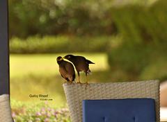 (Galby Rheef) Tags: birds