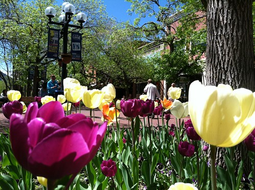 Photo - Spring Tulips on Pearl Street