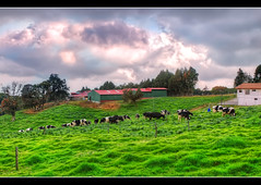 Dairy Farm (-Veyron-) Tags: