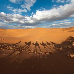 (Nilton Ramos Quoirin) Tags: shadow sand desert areia dune sombra dromedary camel morocco duna deserto marrocos camelo merzouga ergchebbi dromedrio hassilabied