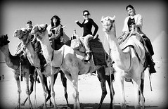 desert transport (WITHIN the FRAME Photography(5 Million views tha) Tags: animals fun desert camels