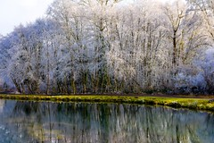I Need Serenity In A Place Where I Can Hide (Celine Chamberlin) Tags: trees winter cold reflection ice nature water weather oregon creek river canal frost ditch icy waterway hoar stayton