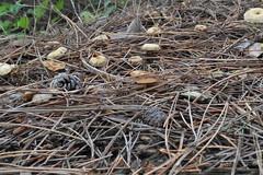 DSC_0692 (caudlewl) Tags: mcculloughpark mushrooms mn