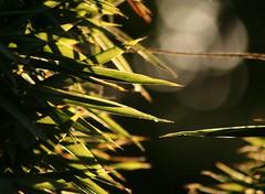 jardin borda (Luisa Asiul) Tags: summer sunlight pflanze blatt sonnenlicht