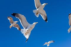 Morocco (hamzagh) Tags: atlanta sky sun seagulls bird beach birds marina canon square boats boat dock ship ships sunny morocco maroc marrakech maghreb essaouira hamza jamaa jamaalefna lefna lafna gharnati