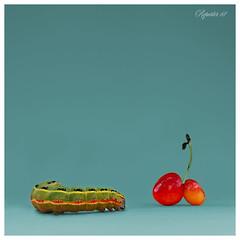 Hunger Spring (Mario Vani) Tags: