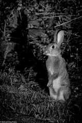 Sorprendido ([Kralik]) Tags: animales conejo