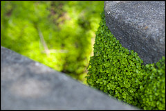 Between the stones (Eric Flexyourhead) Tags: sf sanfrancisco california goldengatepark usa detail green garden japanese rocks bokeh path stones japaneseteagarden fragment zd 50mmmacro20 50mmmacrof20 olympusep1 panasonicdmwma1