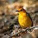 Bird in Kruger