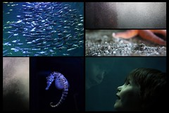 one day in the ozeaneum stralsund (andre_hofmann) Tags: portrait water museum canon germany europe balticsea northsea nordsee ostsee stralsund underwaterworld wale fische unterwasserwelt canoneos50d ozeaneum deutschesmeeresmuseum europeanmuseumoftheyear europasmuseumdesjahres