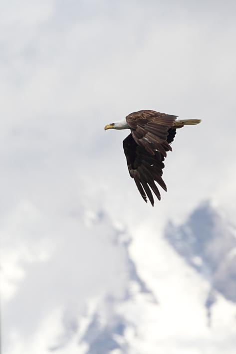 061611_eagle02
