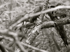 Sticks (K.G.Hawes) Tags: blackandwhite sticks branches creative commons cc bark creativecommons twigs