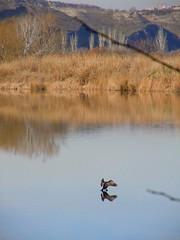 """""""Lagunas de Velilla"""" Invierno humedal (vicentecamarasa) Tags: invierno humedal lagunasdevelilla"""