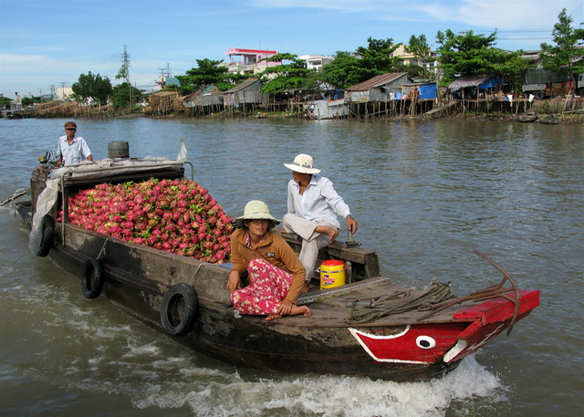 Dragon Fruit Boat, Can Tho, Vietnam