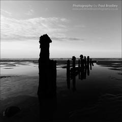 Groyne (B&W Silhouette) (ScudMonkey) Tags: bw monochrome silhouette blackwhite squareformat groyne sandsend paulbradley