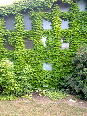 Pattern 246: Climbing Plants (Yonat Sharon) Tags: windows building green christopheralexander greenwalls climbingplants