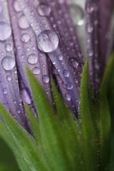 astratto di un fiore (salvix.) Tags: