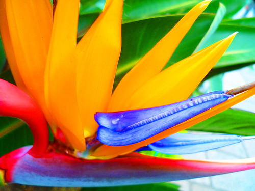 Nature's brilliant colours