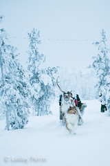 0063 (lesley v) Tags: holiday snow ice finland reindeer husky arctic northernlights auroraborealis january2013 davviarcticlodge