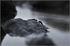 Crabbie (Caarlitoos.) Tags: sea summer espaa water marina sunrise atardecer mar spain agua rocks stones crab alicante verano alta rocas piedras cangrejo dnia