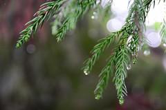 DSC_8888 () Tags: tree      japan