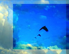 A crow on wing... (acastleblue) Tags: october 5th justafterdawn clouds pictures crowcallsout turn oneshot click onepicture 3editorslatter greglovesadelaide art saturation allsizes acastleblue