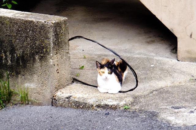 Today's Cat@2011-06-10