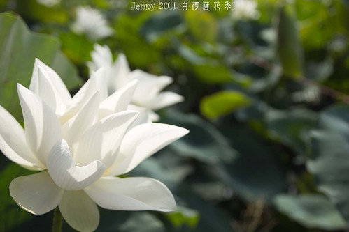 20110620白河蓮花季-5740