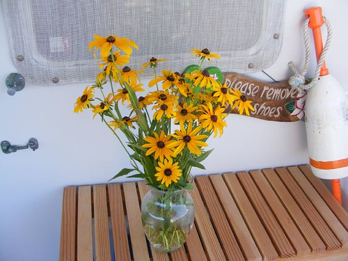Canal-eyed susans