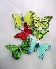 Souvenir aneka kupu