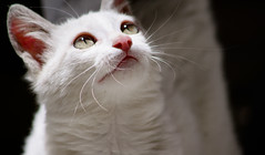 look for inspiration (oussama mestari) Tags: animal cat canon 300mm 500d flickrawardgallery